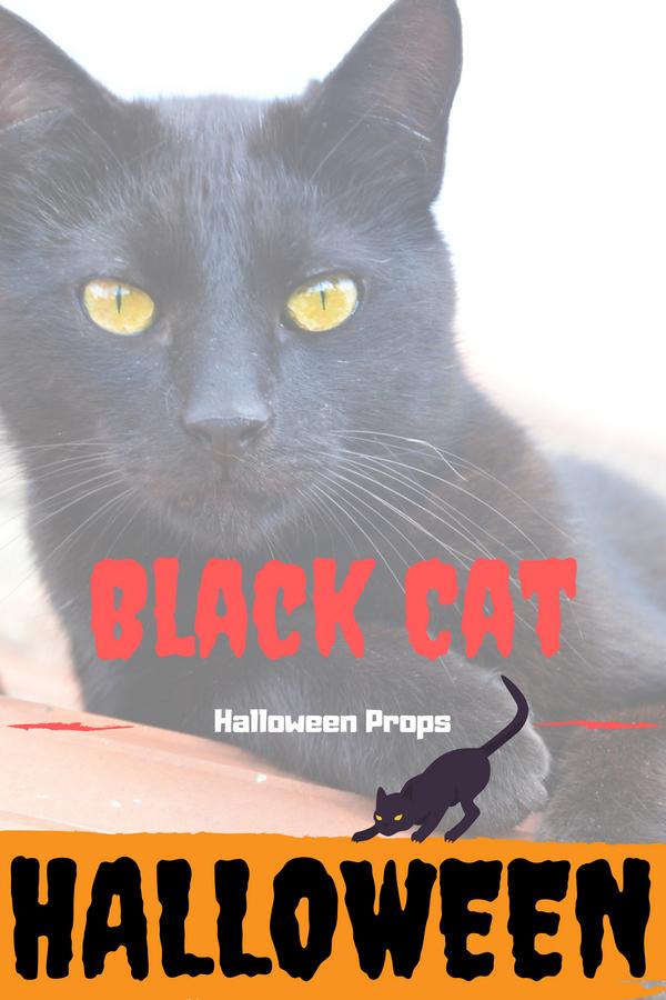 Black Cat Halloween Prop